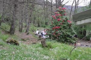 Wesak 2013 - Il rododendro in fiore