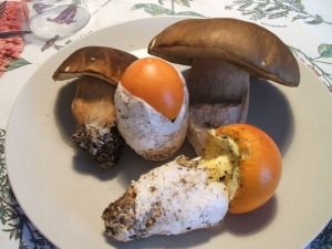 F U N G H I porcini e ovoli