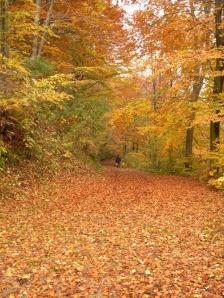 .......aspettando l'autunno....