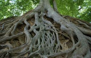 """""""senza profonde radici l'albero non può ergersi verso il cielo"""""""